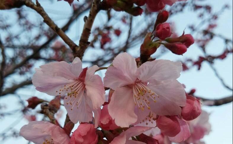🌸春が来た🌸
