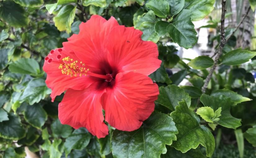 リフレッシュin沖縄